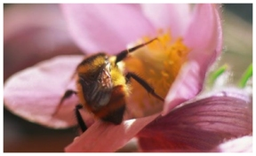 bee flower Faith in Action - James 2
