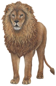 Stand Firm (even in the lion's den) - Daniel 6